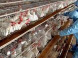 گزارش کنترل آنفلوآنزای پرندگان به جهانگیری