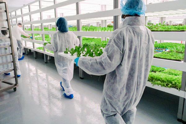 تولید سالانه 450 کیلوگرم محصولات کشاورزی در لاسوگاس