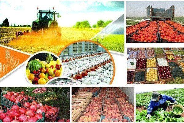 کرونا به ۱۳ رسته کشاورزی همدان خسارت زد