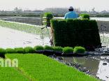 فعالیتهای مرتبط با برنج در قالب زنجیره انجام میشود