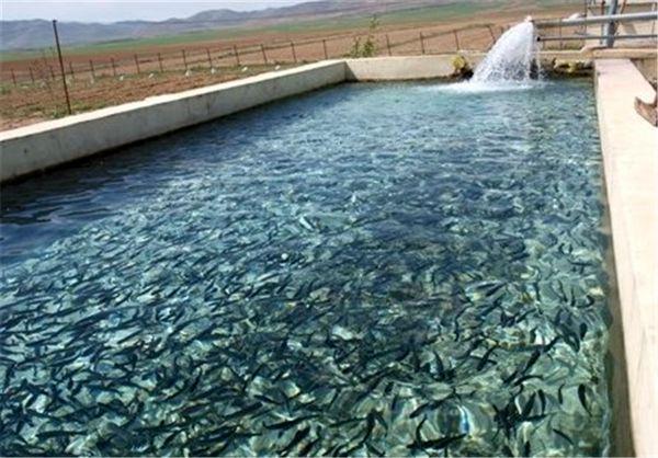تولید 24 هزار تن ماهیان سردابی در چهارمحال و بختیاری
