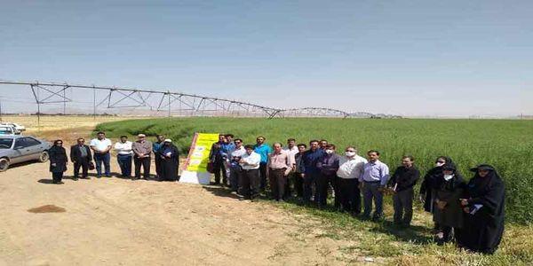 برگزاری روز مزرعه کلزا در شهرستان شاهین شهرو میمه