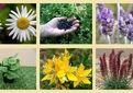 گنگره گیاهان دارویی؛ مکانیزاسیون و فرآوری برگزار می شود