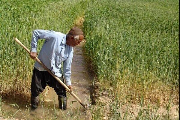توصیه کارشناسان کشاورزی فردوس درخصوص جلوگیری ازخسارت آفات