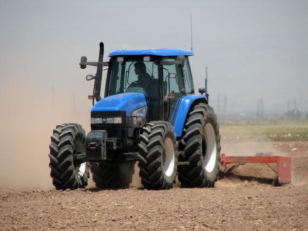 کشت جو در مزارع کشاورزی استان قزوین آغاز شد