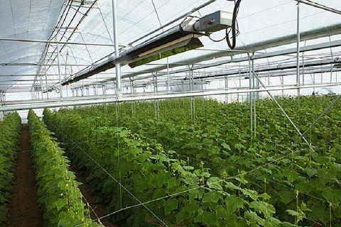 یک واحد تولید محصولات گلخانهای در شاهرود افتتاح شد