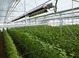 توسعه 12.6 هزار هکتاری سطح گلخانه های کشور