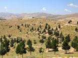 هکتار جنگلکاری در استان قزوین انجام میشود
