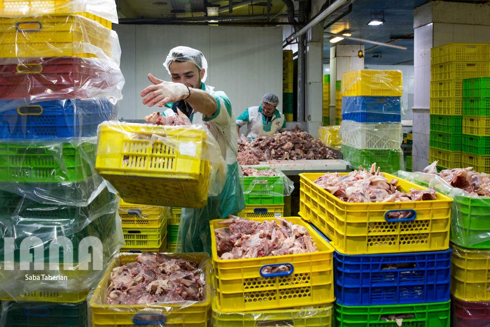 بستهبندی محصولات پروتئینی