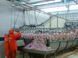 تولید ٣٠ هزارتن گوشت مرغ در سیستان و بلوچستان