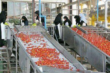 صنایع تبدیلی و غذایی خراسان شمالی توان فرآوری ۸۴۰ هزار تن محصول را دارد