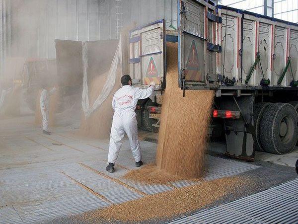 قیمت گندم براساس نرخ تورم تعیین شود