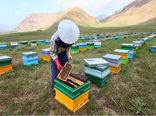 افزایش زنبورستانهای بیمه شده تا پایان سال جاری