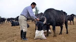 واکسیناسیون بیش از ۴۲۰ هزار راس دام سبک علیه بیماری طاعون نشخوارکنندگان کوچک در شهربابک