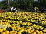 افزایش 25 درصدی تورم تولید در بخش زراعت، باغداری و دامداری سنتی