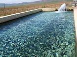 برداشت ماهی گرمابی از استخرهای ذخیره آب خراسان شمالی