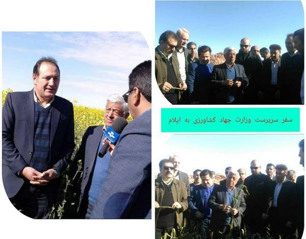 بازدید سرپرست وزارت جهاد کشاورزی از مزارع شهرستان دهلران