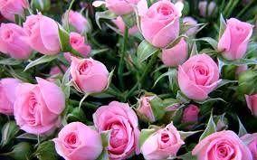 ثبات قیمتها در بازار گل