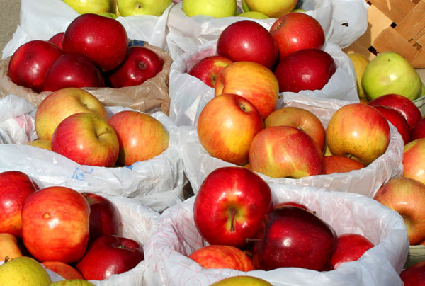رشد 84 درصدی صادرات محصولات باغی