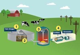 تولید برق با استفاده از فضولات دام