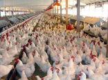 شاخص قیمت تولیدکننده محصولات مرغداریهای صنعتی کشور تابستان ١٣٩٩