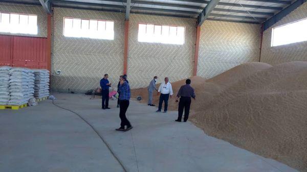 فعالیت دومین مرکز فرآوری بذرهای کشاورزی سطح کشور در شهرستان رباط کریم