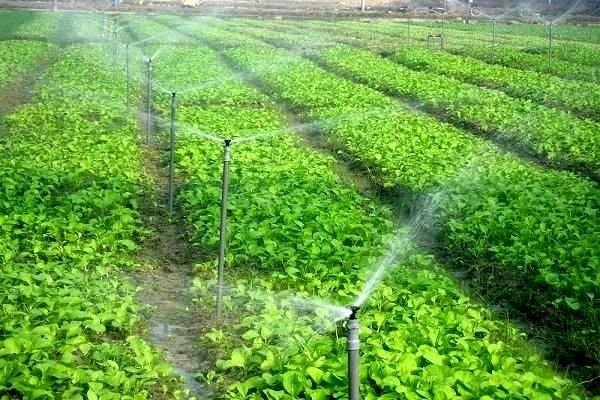 پیگیری برای تحقق کشاورزی تجاری خراسان جنوبی