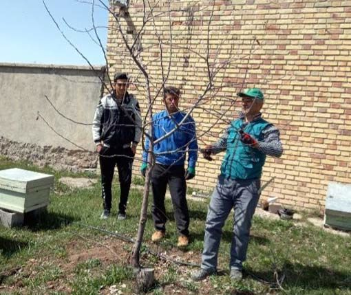 هرس دو هزار هکتار از باغات شهرستان هشترود