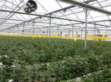 فرماندار فیروزکوه خواستار حمایت تمامی دستگاه ها از توسعه طرح های گلخانه ای شد