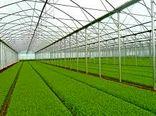برداشت ۹۳ هزار تن محصولات گلخانهای از اراضی استان بوشهر