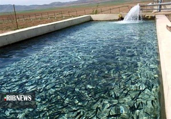 تولید 4هزار و 300تن ماهی قزل آلا تا پایان سال جاری
