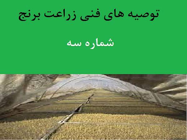 توصیههای فنی زراعت برنج