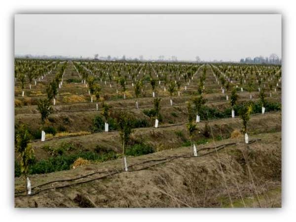 522 هکتار اراضی کشاورزی بابلسر به سیستم آبیاری کم فشار مجهز شد