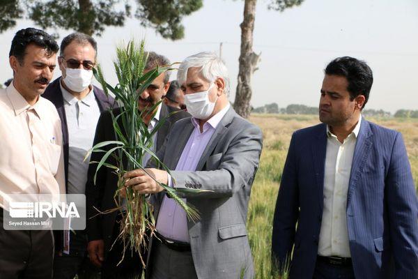 انتقال دانش از مراکز تحقیقاتی به مزرعه رویکرد مهم جهادکشاورزی است