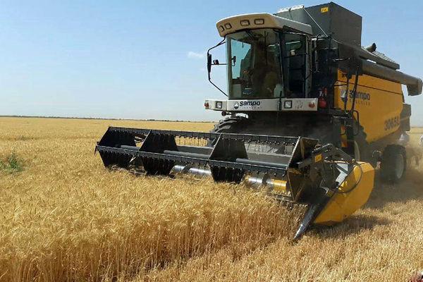 پیش بینی برداشت ۲۵۰ هزار تن گندم از مزارع بیجار