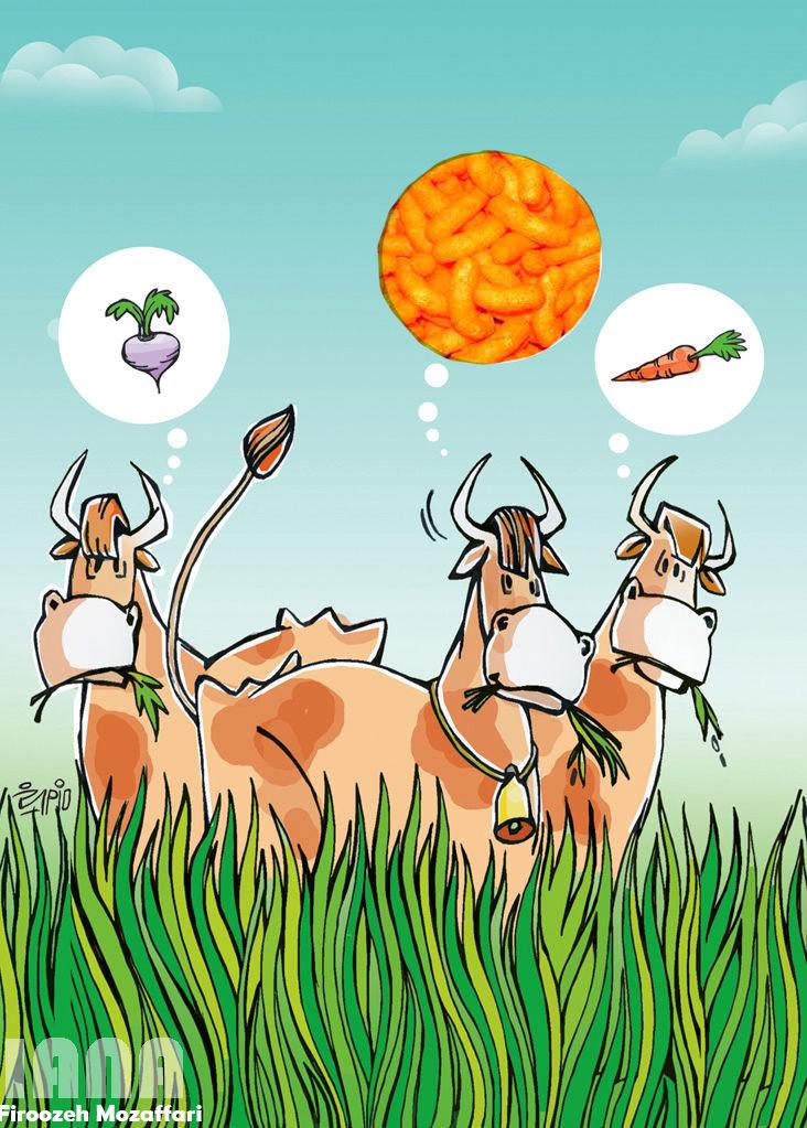 پفک باطعم غذای گاو- کارتون فیروزه مظفری