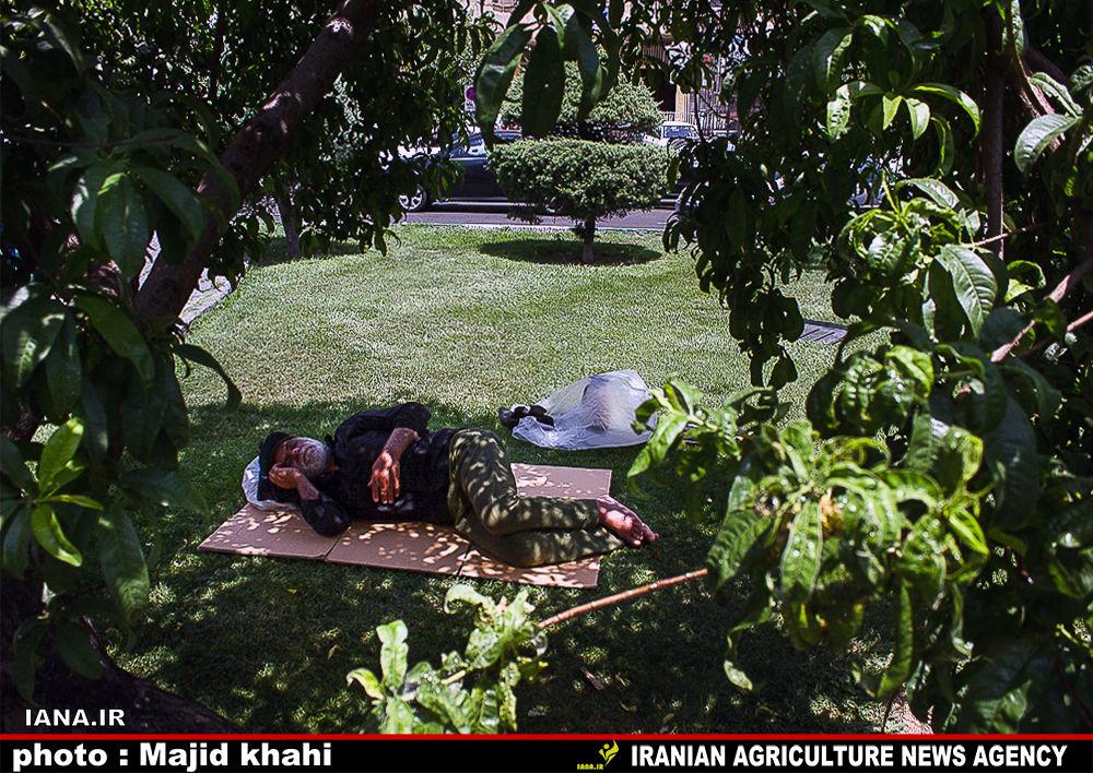 استراحت در فضای سبز شهری