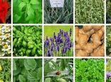 کشت بیش از ۶۰ گونه از ۸۰ گونه گیاهان دارویی در اصفهان