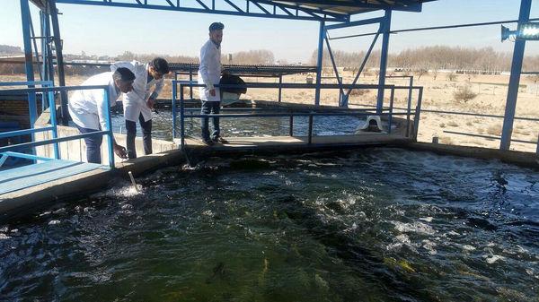 پرورش ماهیان خاویاری گامی مهم در کرمان است