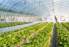 یک تیر و چند نشان با توسعه گلخانهها