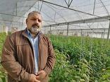 تعلل سرمایه گذاران در نهضت گلخانهای استان