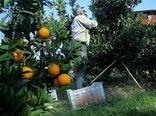بیمه محصولات باغی تا پایان خرداد تمدید شد