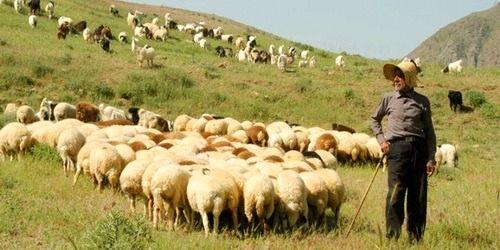 دامداران آذربایجان غربی نسبت به تمدید پروانه چرا اقدام کنند