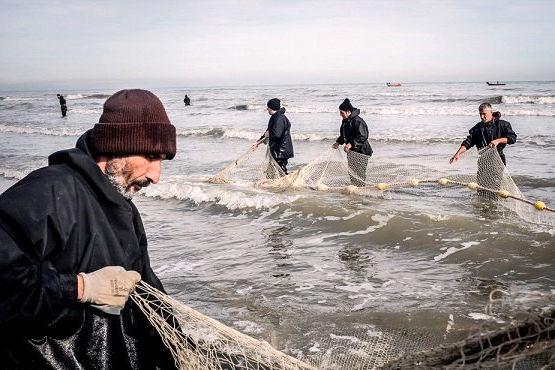صید ۱۶۰۰ تن انواع ماهیان استخوانی در مازندران