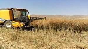 افزایش 46 درصدی خرید گندم در استان فارس نسبت به سال گذشته