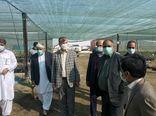 معاون وزیر جهادکشاورزی از مجتمع کشت و صنعت مکران در سیستان و بلوچستان بازدید کرد