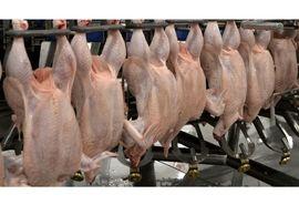 تولید سالانه 16 هزار تن گوشت سفید در بابلسر