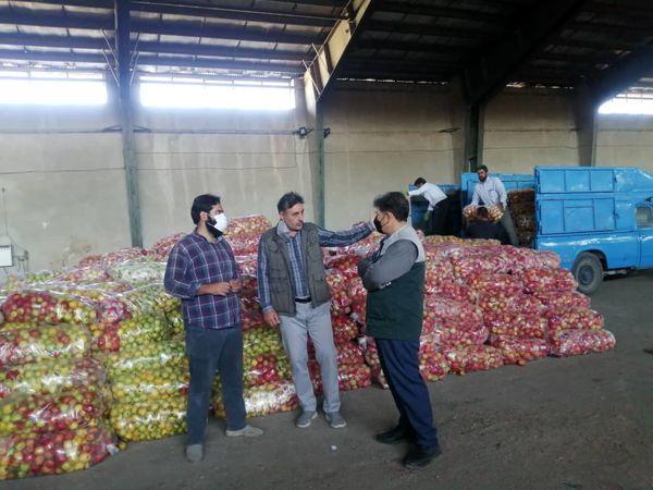 خرید تضمینی ۱۳۵۰ تن سیب صنعتی در شهرستان نقده