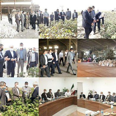 بازدید معاون امور زراعت وزیر جهاد کشاورزی از کارخانه پنبه خاوردشت