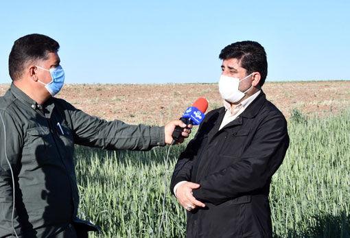 اجرای طرح جهش تولید گندم دیم در سطح 104 هزار هکتار از مزارع آذربایجان شرقی